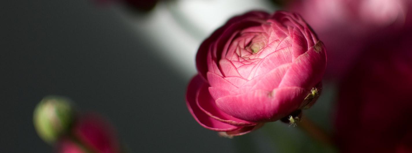 Foto: © lunamedia.nl